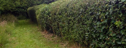 hedge-cutting-text